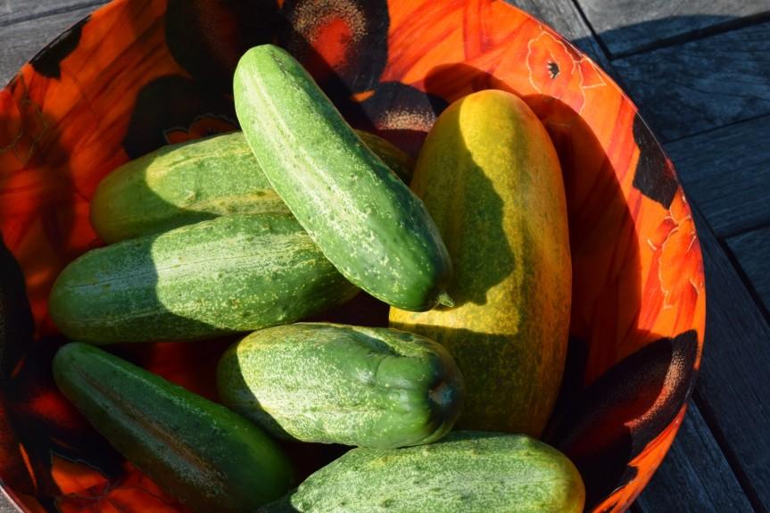 In Season: July—Cucumbers